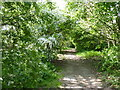 SO8961 : Woodland walk, Pulley Lane, Droitwich by Jeff Gogarty