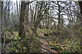 TR1053 : Footpath, Denge Wood by N Chadwick