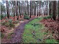 SU9319 : Bridleway, Selham Common by Peter Holmes