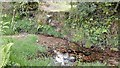 SX2871 : Footpath Steps into Stream by James Emmans