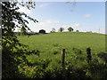 H5259 : Dunbiggan Townland by Kenneth  Allen