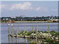 SZ0288 : Brownsea Lagoon, Tern Islands by David Dixon