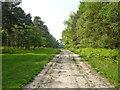 SU9067 : Ride, Swinley Forest by Robin Webster