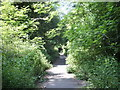 Dist:0.2km<br/>The trees, bushes and wild plants that line this pathway are amazing.