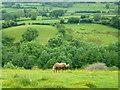 SO2422 : Lone horse in the beautiful Grwyne Fechan valley by Jonathan Billinger