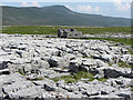 SD7276 : Limestone pavement on Scales Moor : Week 23