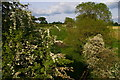 SJ6541 : Valley full of blossom from the canal towpath, Cox Bank by Christopher Hilton