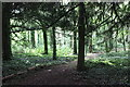 SJ0478 : The Woodland at Bodrhyddan by Jeff Buck