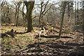 SX1561 : Hawkey's Piece Plantation by Derek Harper