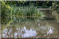 TQ2897 : Lake, Trent Park, Cockfosters by Christine Matthews