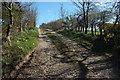 SX1163 : Track, Bofarnel Downs by Derek Harper