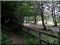 SZ1095 : Muscliff: bridleway M18 continues alongside Wilderness Way by Chris Downer