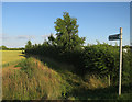 TL4650 : Footpath to Sawston by Hugh Venables