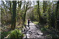 SX4370 : Tamar Valley Discovery Trail by N Chadwick