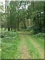 SP9714 : Ashridge Estate by Dave Thompson