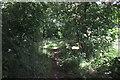 SJ5462 : Back Lanes to Tarporley by Jeff Buck