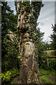SJ7979 : Face in a tree, Mobberley by Brian Deegan