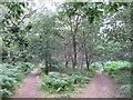SU9587 : Public and permissive paths, near Harehatch Lane by David Hawgood