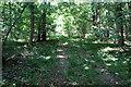 TL1346 : Track through Sheerhatch Wood by Philip Jeffrey