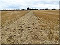 SP8049 : Bridleway across a stubble field : Week 36