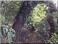 TR3547 : Hangman's Lane – overgrown by Hugh Craddock