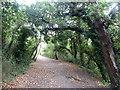 TQ8166 : Berengrave Local Nature Reserve, Rainham by pam fray