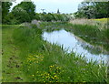 SK7594 : Chesterfield Canal towards Misterton by Mat Fascione