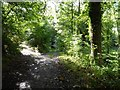 SO6855 : Woodland path, Brockhampton Estate by Philip Halling