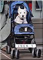 NN1074 : Jock 1 : Week 40