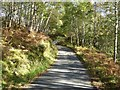 NN1290 : Flanked by silver birch by Oliver Dixon