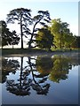 SO8844 : Trees reflected in a lake in Croome Park : Week 41