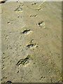 NJ1670 : Fossil Trackway by Anne Burgess