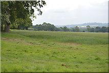 TQ5245 : Penshurst Park by N Chadwick