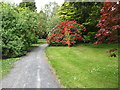J3337 : Castlewellan Castle Arboretum by Eric Jones