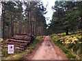 NO4392 : Log pile in Glen Tanar Forest by John Allan