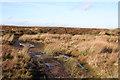 NT1662 : Mud Bath by Anne Burgess