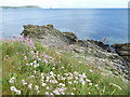 SW8835 : Sea Pinks and rocky coast at Pednvaden by Rod Allday