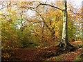 SD7011 : Autumn in Raveden Plantation by Philip Platt