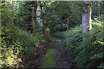 TQ3328 : High Weald Landscape Trail, River's Wood by N Chadwick