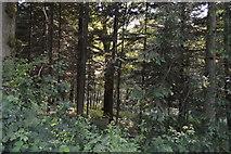 TQ3328 : River's Wood by N Chadwick