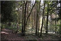 TQ3327 : River's Wood by N Chadwick