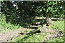 TQ3327 : High Weald Landscape Trail by N Chadwick
