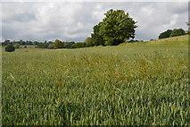 TQ5344 : Arable land by N Chadwick