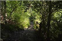 TQ3326 : High Weald Landscape Trail, Flat Wood by N Chadwick