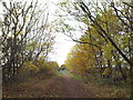 NZ3254 : Bridleway on former railway at Cox Green, near Washington by Malc McDonald