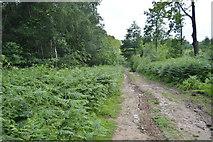 TQ5345 : Track, Penshurst Park by N Chadwick