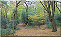 TQ4894 : Paths cross in Hainault Forest by Roger Jones