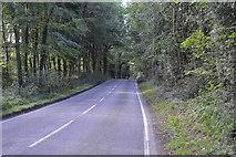 TQ3227 : Bordenhill Lane by N Chadwick