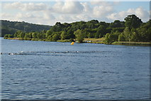 TQ3328 : Openwater swimmers by N Chadwick