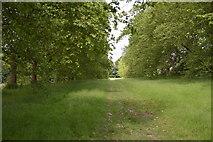 TQ5345 : Penshurst Park by N Chadwick